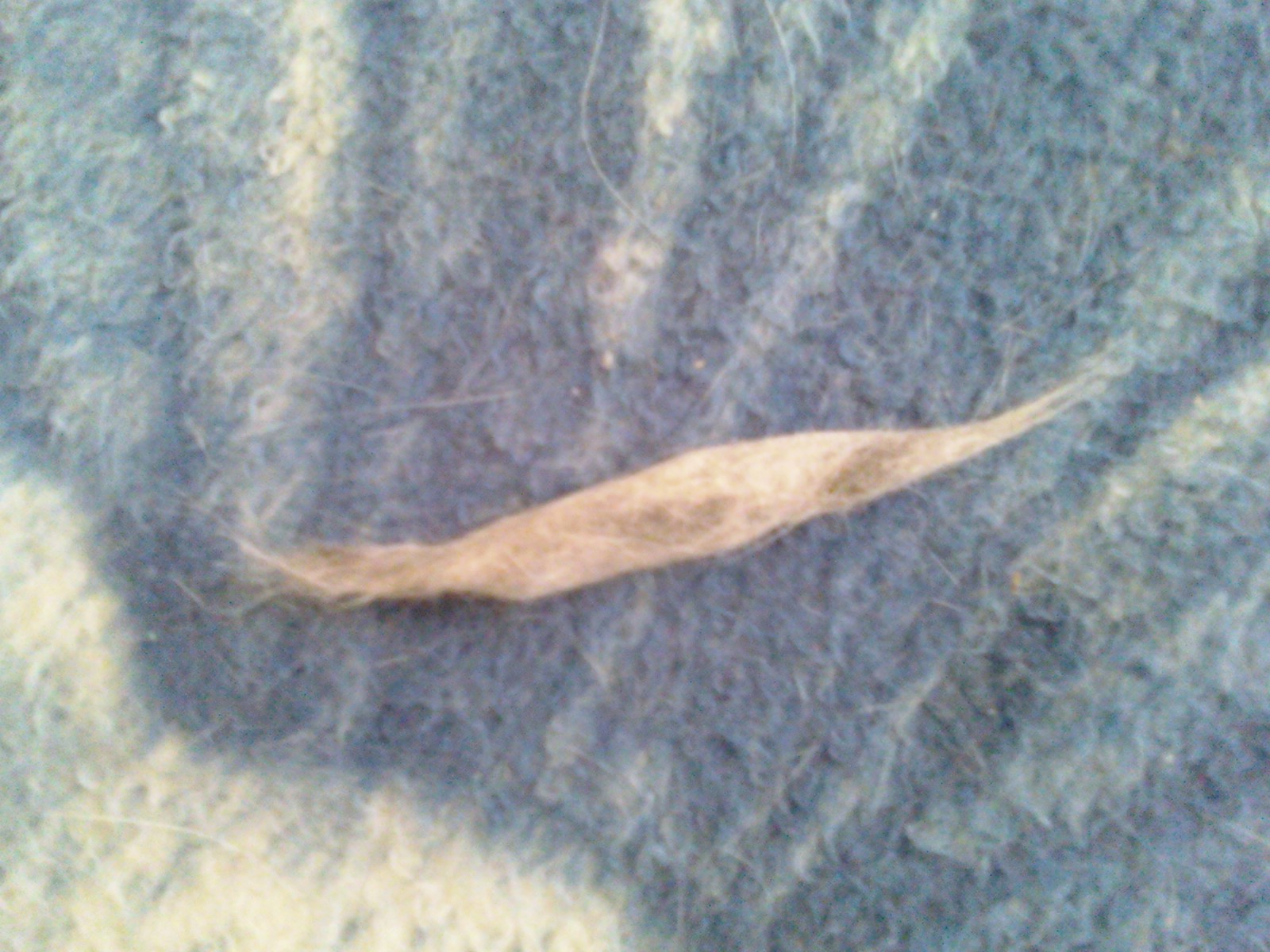 My cat hates to be brushed so how do I help keep the shedding to a minimum?-cat-fur-cigar-toy.jpg