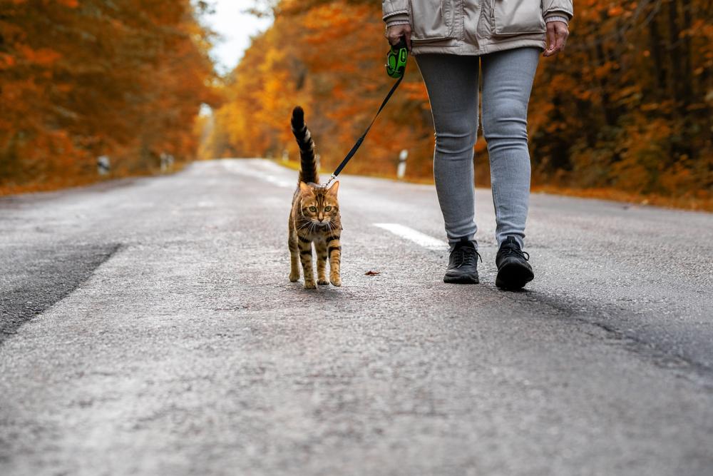 www.catforum.com