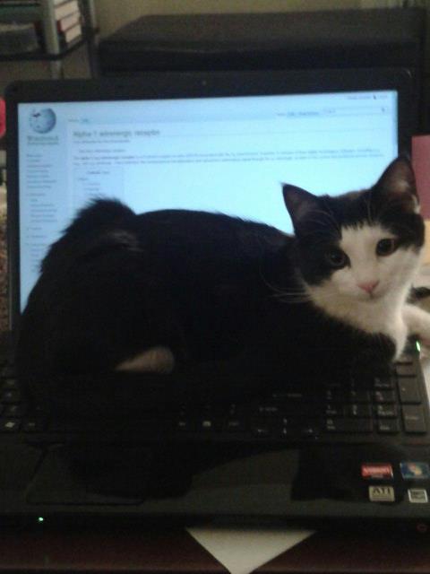 Layla-computer.jpg