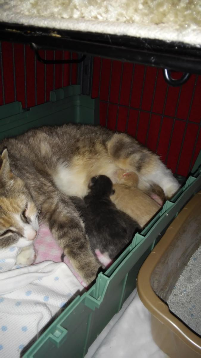 Click image for larger version  Name:Darci and Babies (1).jpg Views:126 Size:78.6 KB ID:83449