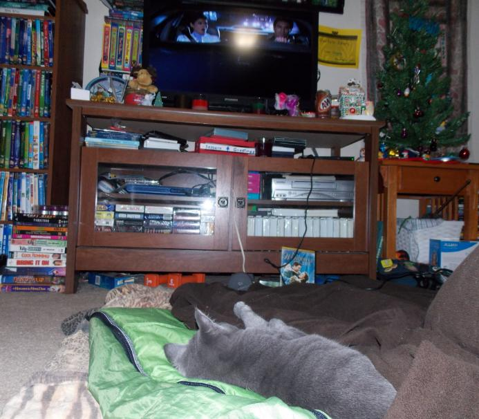 Does you cat watch TV?-helios.jpg