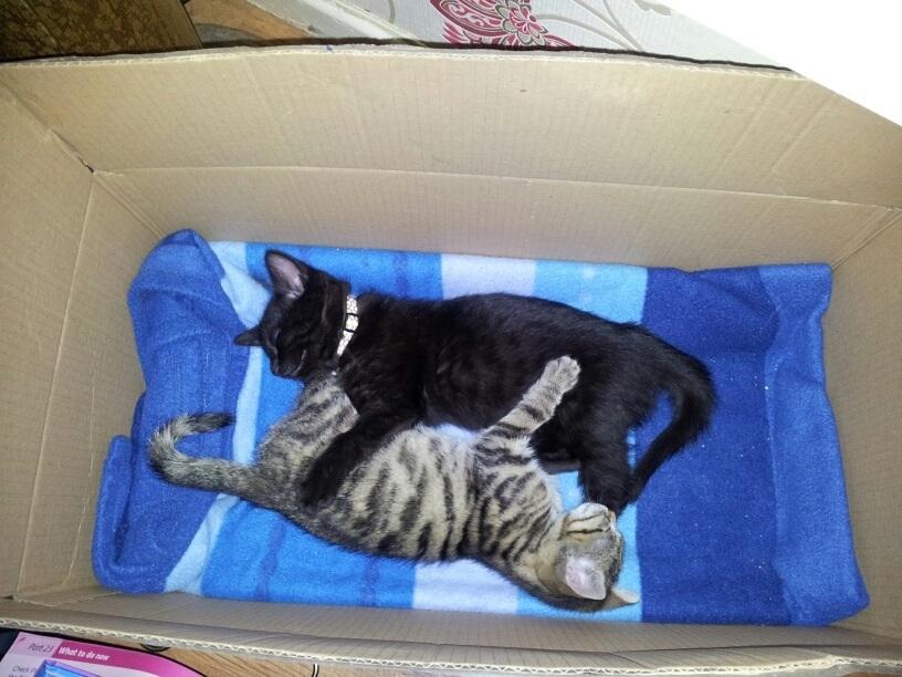 Tiger & Jacko-image.jpg