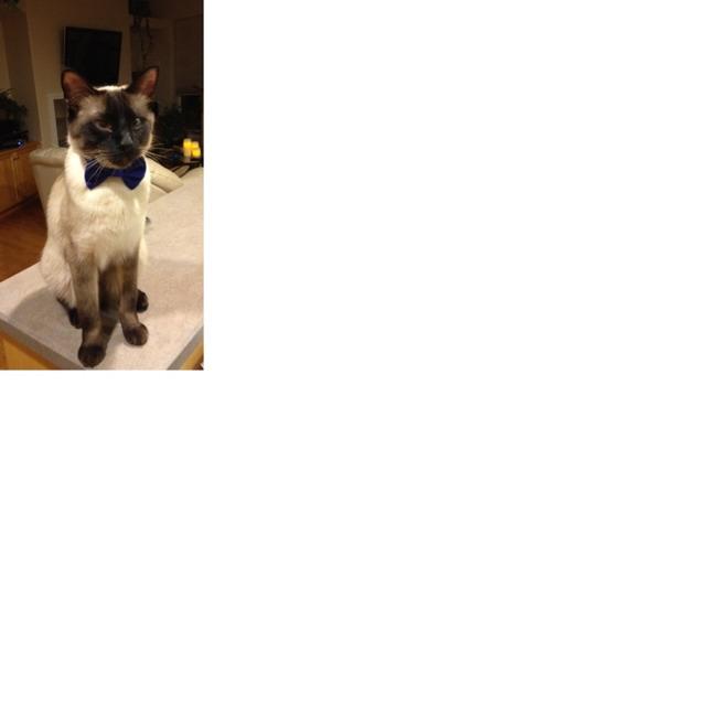 Quincy in his bowtie-imageuploadedbypg-free1353251986.648116.jpg