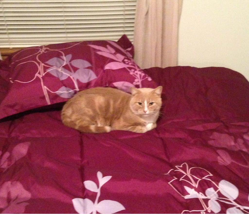 Meet Chester!-imageuploadedbypg-free1353334098.913888.jpg