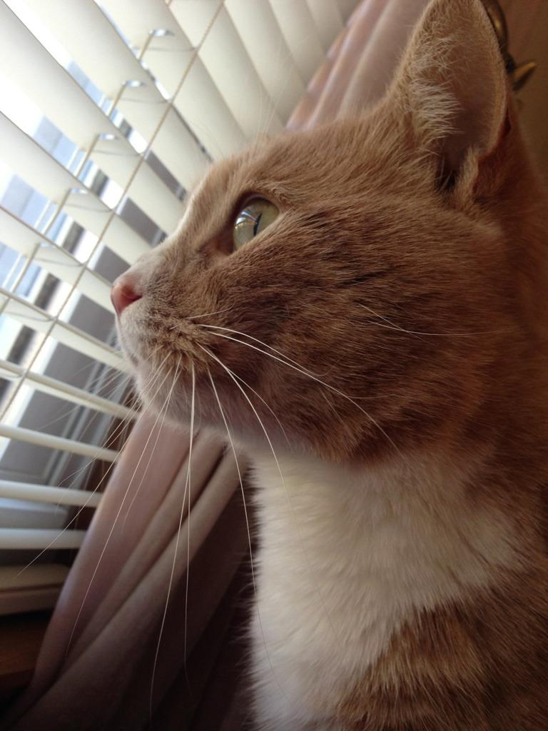 Meet Chester!-imageuploadedbypg-free1353334129.344210.jpg