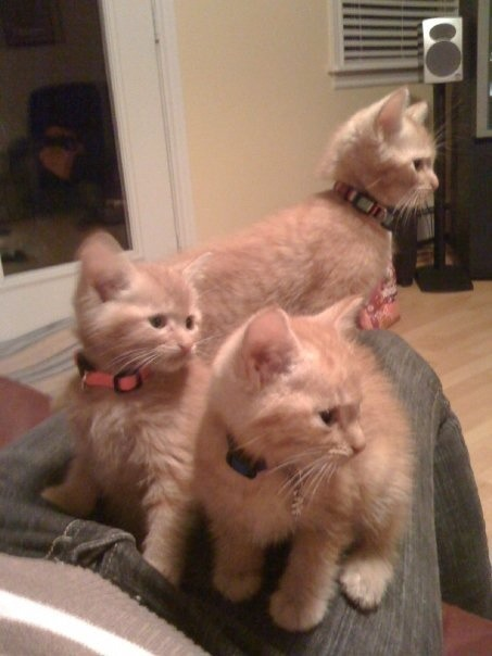 Orange kitties-imageuploadedbypg-free1353714305.751821.jpg