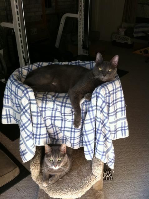 Meet my kids-imageuploadedbypg-free1357084568.553403.jpg