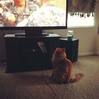 Does you cat watch TV?-imageuploadedbypg-free1357337852.582147.jpg