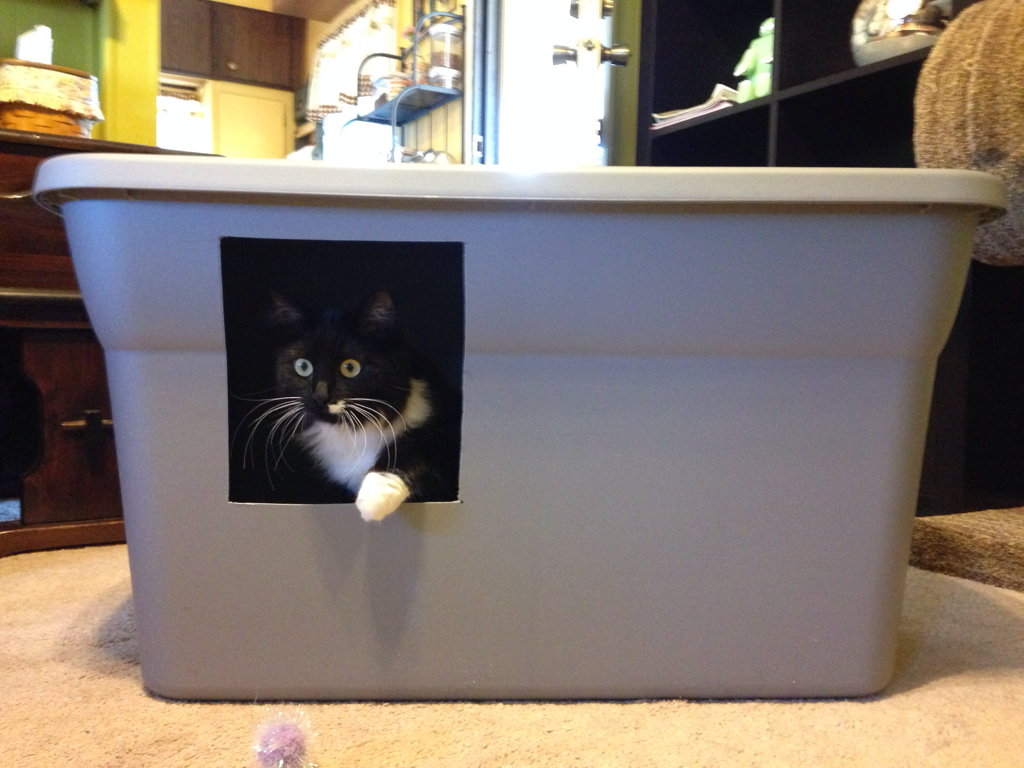 question about DIY litter box Cat Forum Cat Discussion Forums