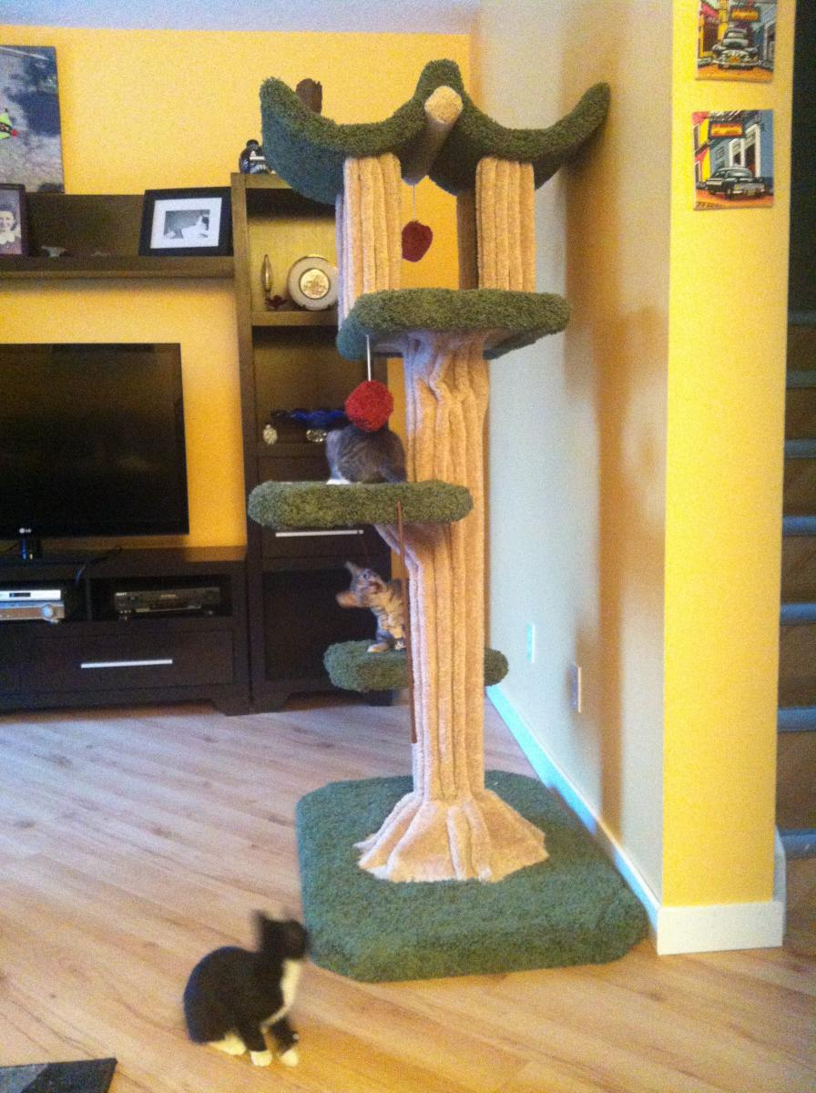 Building your own kitty jungle gym...-img_1380.jpg