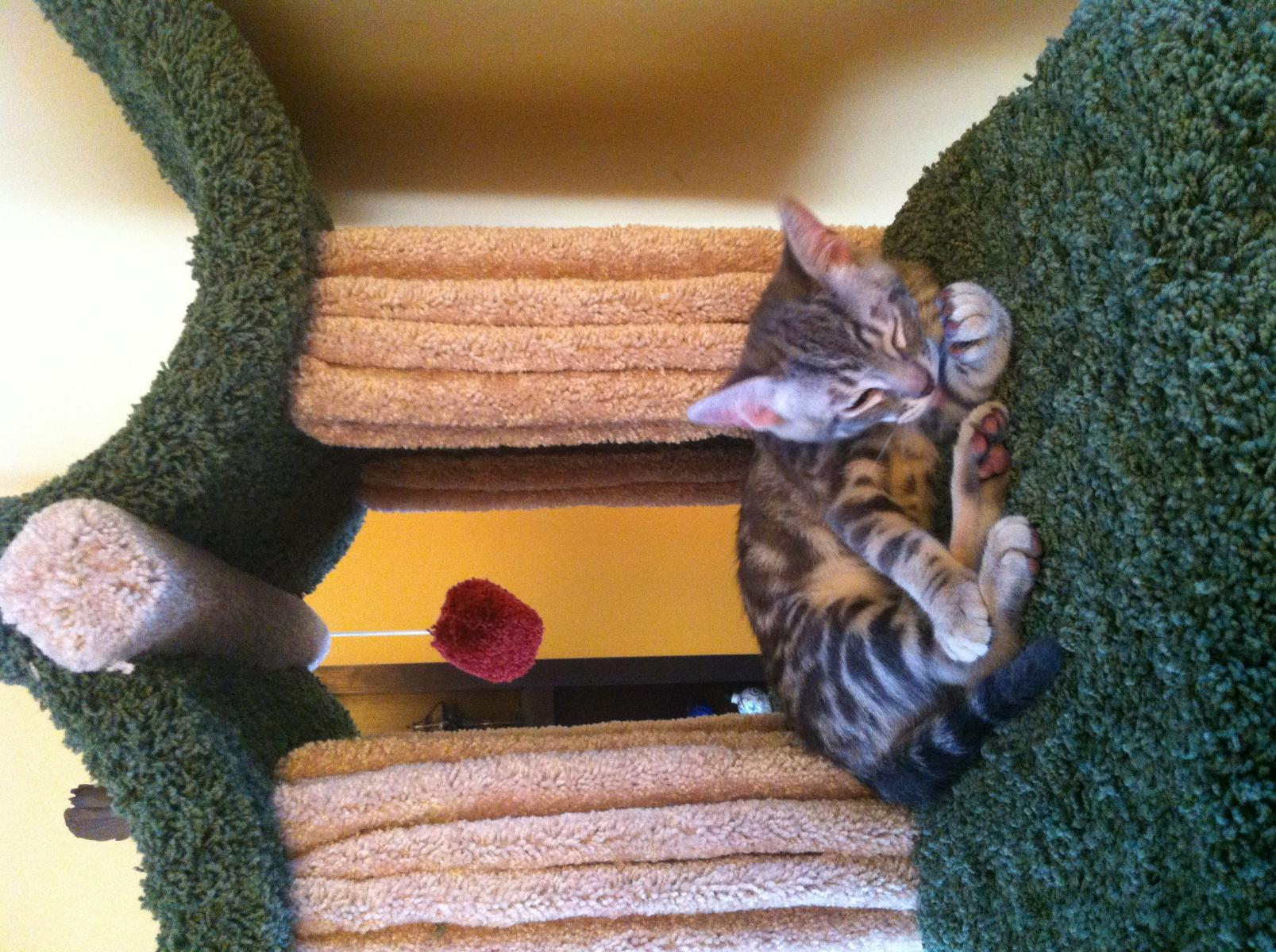 Building your own kitty jungle gym...-img_1392.jpg