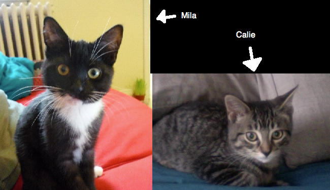 Meet my lovely kittens-milancalie.png