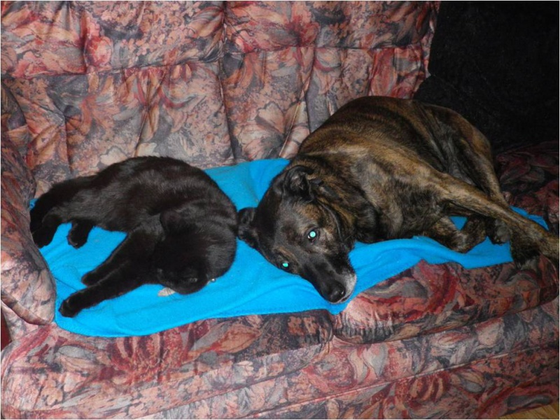 Click image for larger version  Name:Sadie and twin.jpg Views:36 Size:199.1 KB ID:102106