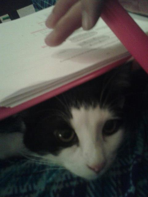 Layla-study.jpg