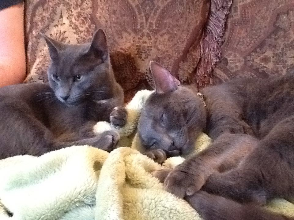 Click image for larger version  Name:two cats.jpg Views:159 Size:110.4 KB ID:4099