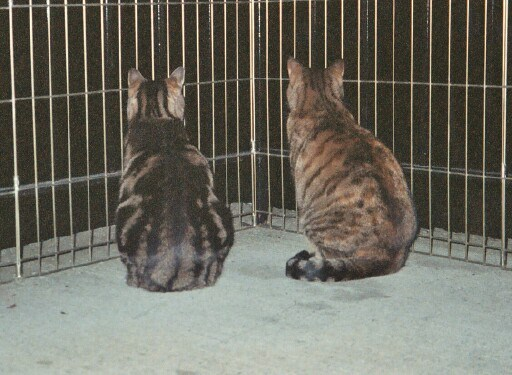 Click image for larger version  Name:two on the balcony.jpg Views:7 Size:83.7 KB ID:118690