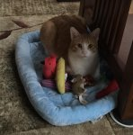 Chino and his toys 42715.jpg