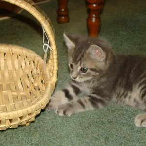 Tuffy - about 7 wks old - he was so cute.