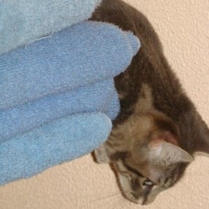 Tuffy - hiding behind towels!